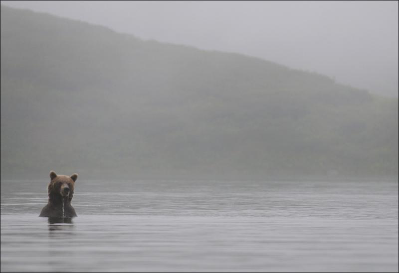 Bears In Fog 6