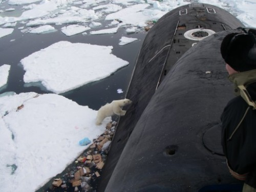 Polar bears on Russian submarine 2