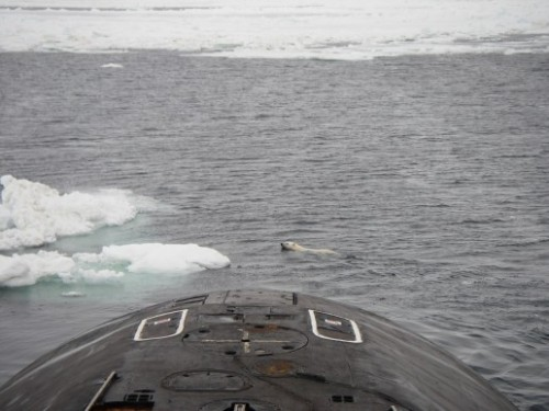 Polar bears on Russian submarine 3