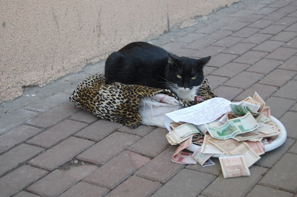 Russian cat begs money
