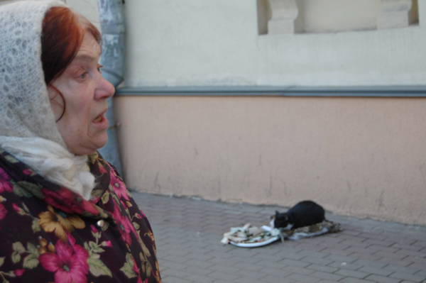 Russian cat begs money 4