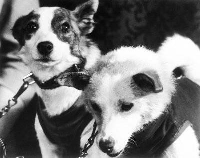 russian dogs in space 1