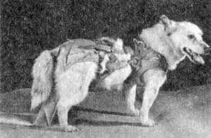russian dogs in space 2