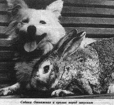 russian dogs in space 8