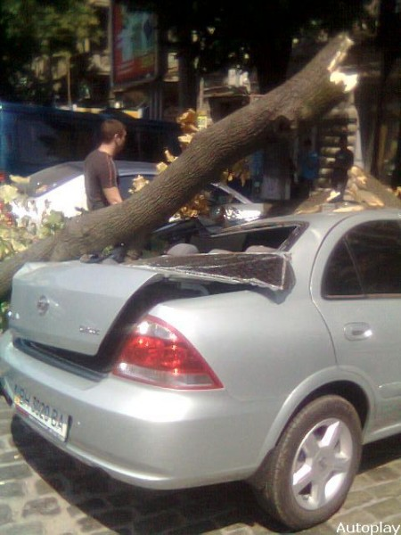 the tree has fallen down on your car 4