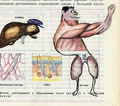 russian biology textbook 15