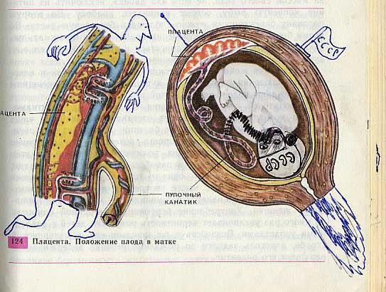 russian biology textbook 17