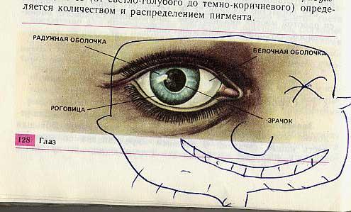 russian biology textbook 20