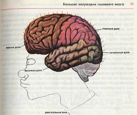 russian biology textbook 5