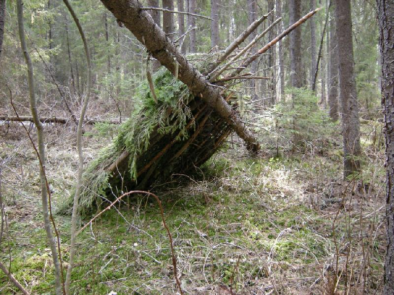 How To Build A Shelter In The Forest