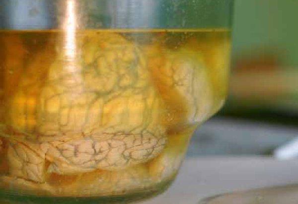 abandoned secret brain lab in Russia 1