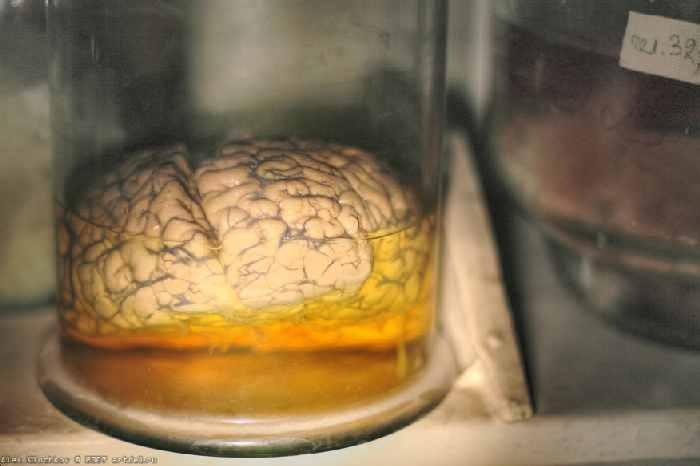 abandoned secret brain lab in Russia 23