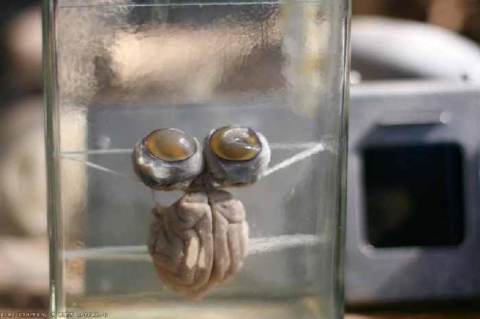 abandoned secret brain lab in Russia 25