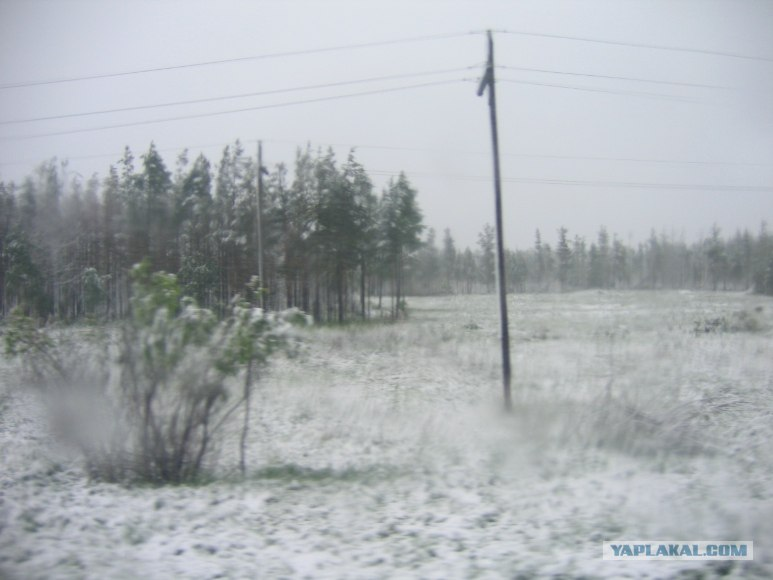 Snow in summer 5