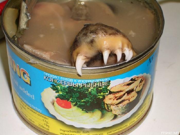 atlantic herring 5