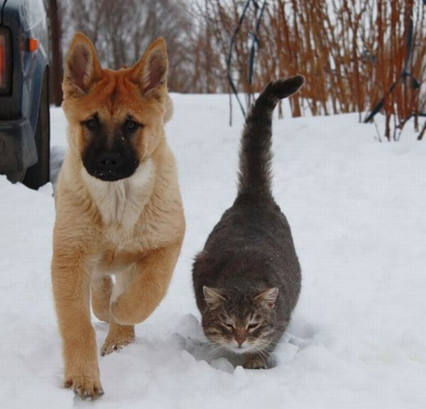 Cute dog and cat friends - photo#17
