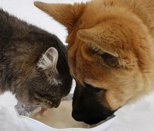 Russian cat and Russian Dog 2