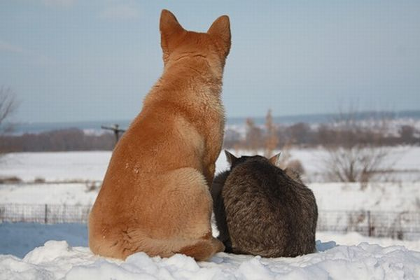 Russian cat and Russian Dog 5