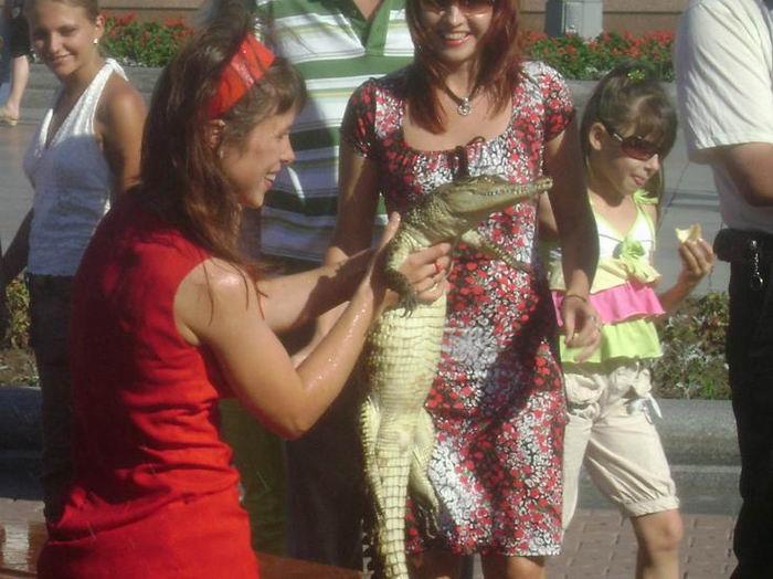 crocodile in the fountain in Russia 3