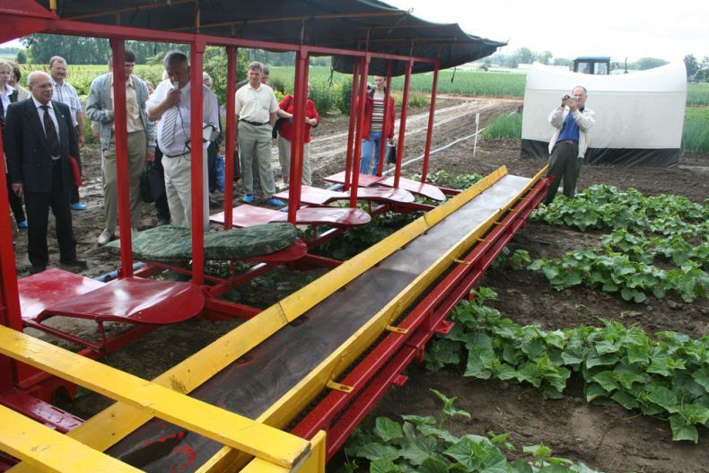 people pick up cucumbers in Belarus 13