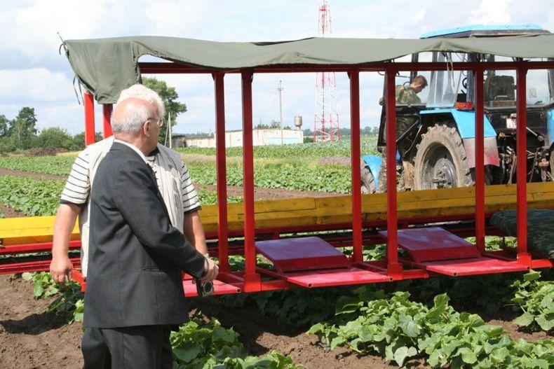 people pick up cucumbers in Belarus 15
