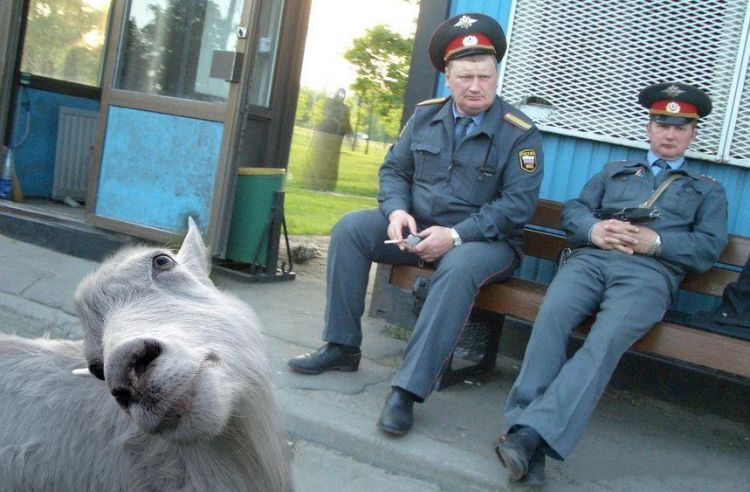 Russian life 9