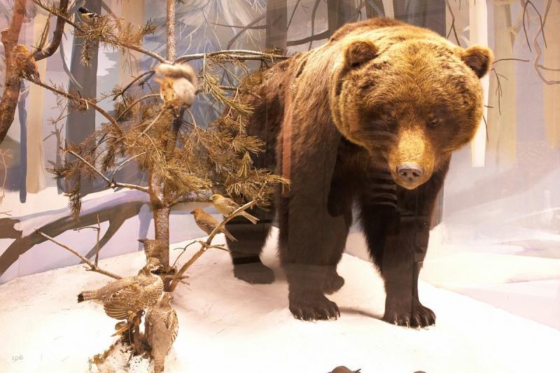 Darvinovsky Museum 16