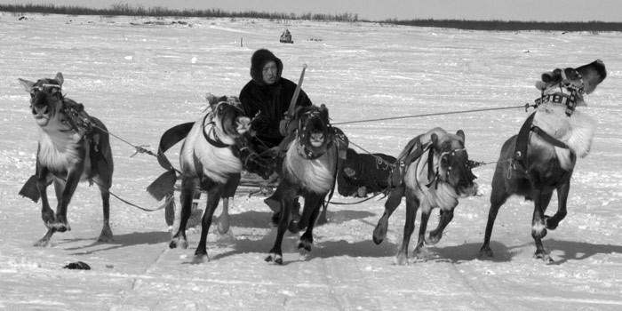 Russian deer racing 11