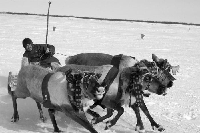 Russian deer racing 12
