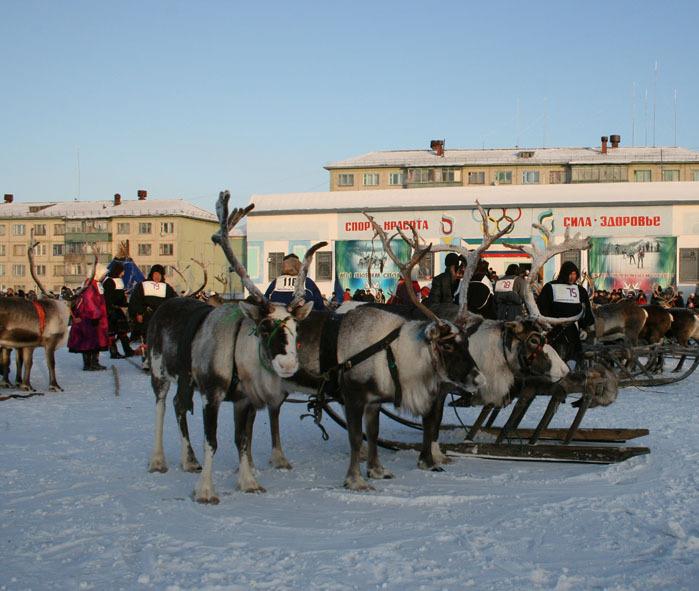 Russian deer racing 18