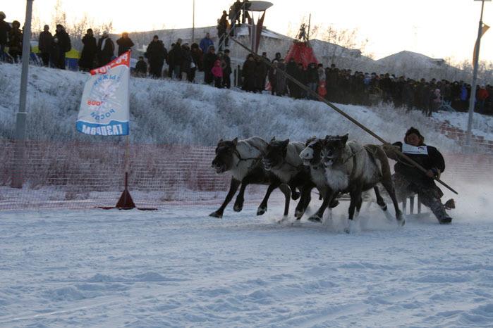 Russian deer racing 23