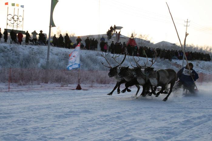 Russian deer racing 24