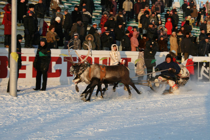 Russian deer racing 26