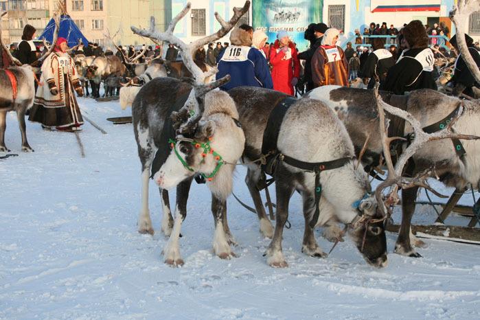 Russian deer racing 30