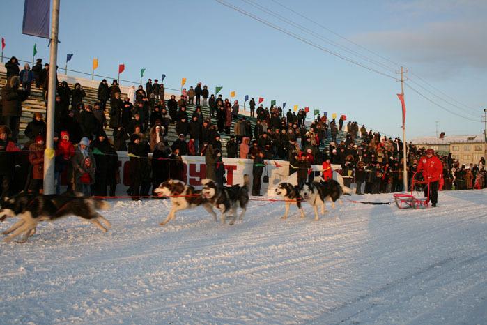 Russian deer racing 33