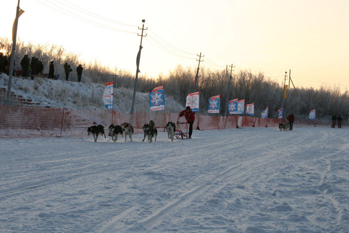 Russian deer racing 34