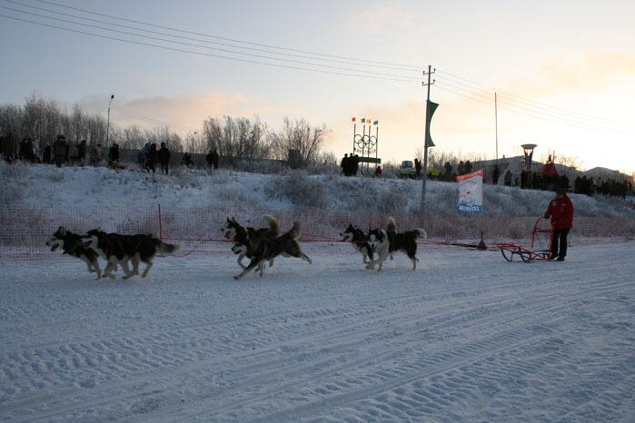 Russian deer racing 35