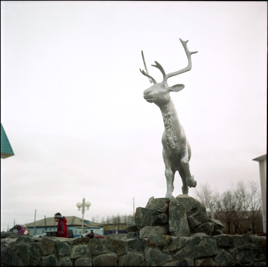 Russian deer racing 40