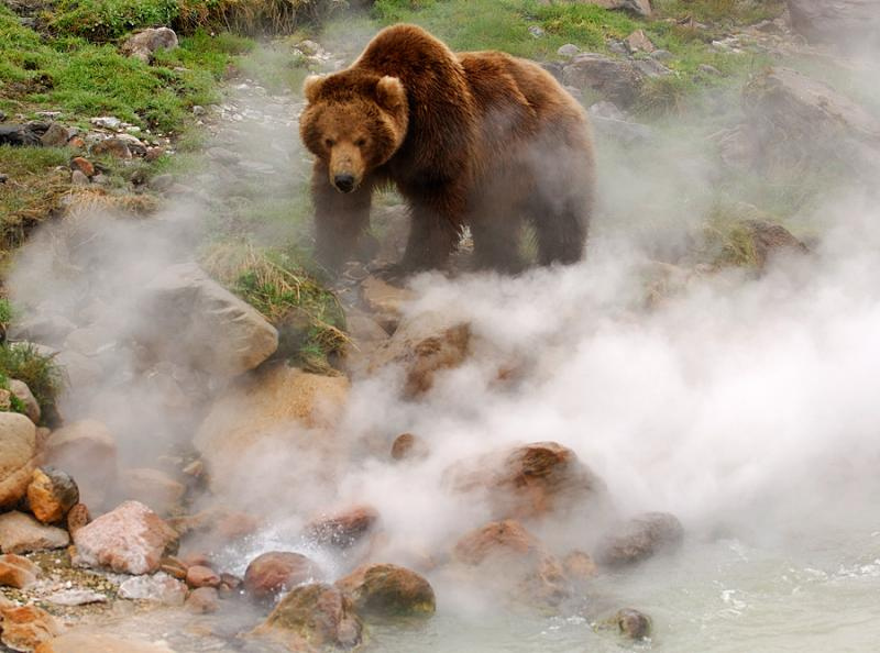 Do Bears Scorch Paws in the Valley of Geysers? 3