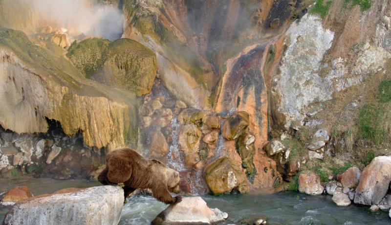 Do Bears Scorch Paws in the Valley of Geysers? 9