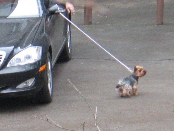 Russian dog 3
