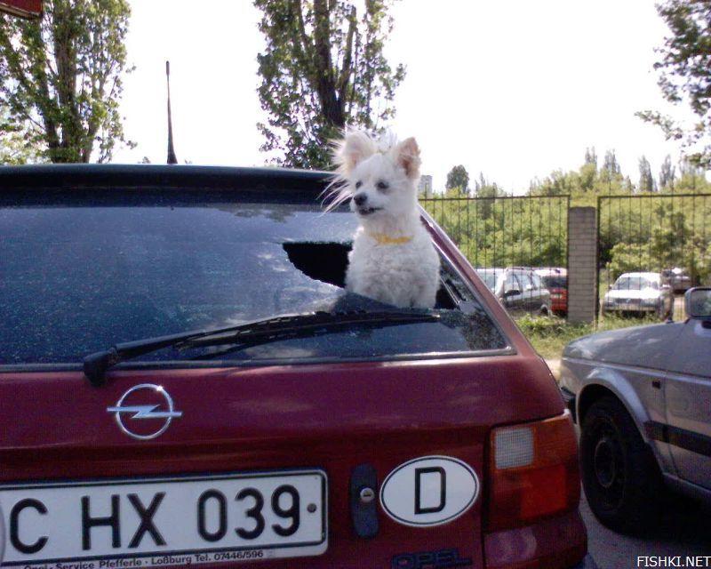 a dog window 2