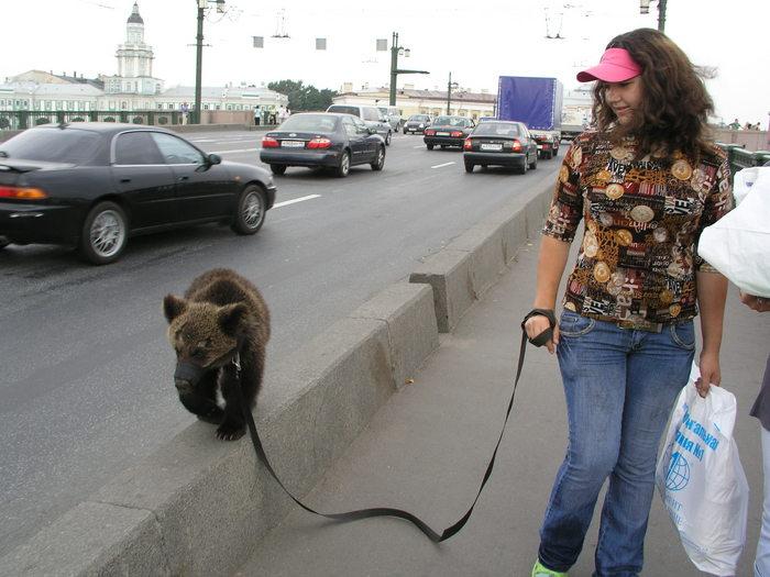 Beware: Bears!