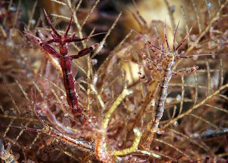 Deep sea life in the Russian White Sea 27