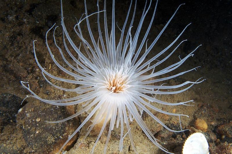 Deep sea life in the Russian White Sea 36