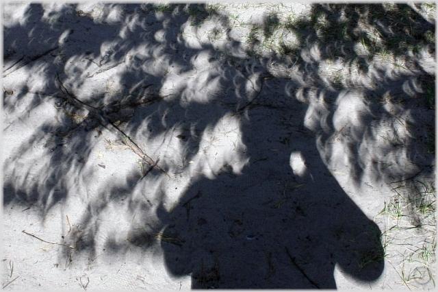 Solar eclipse 2008 in Russia 9