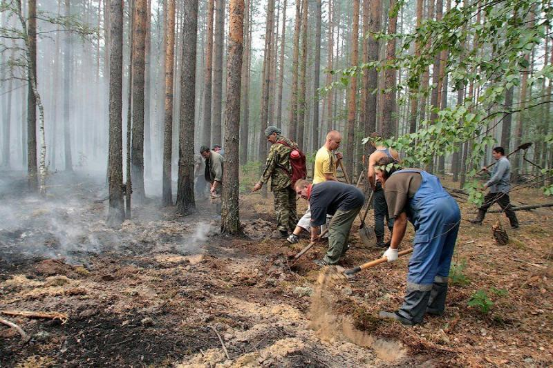 Extinguishing Wildfires 20