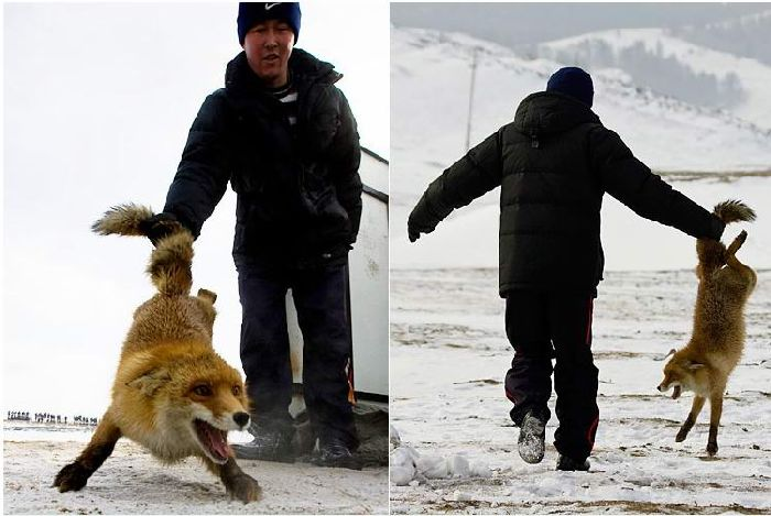 Hunting with falcons in Kazakhstan, Russia 12