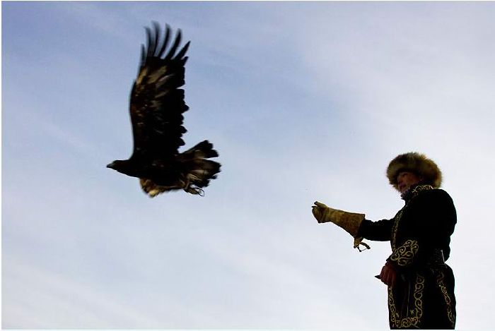 Hunting with falcons in Kazakhstan, Russia 3