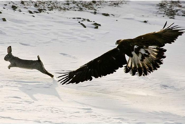 Hunting with falcons in Kazakhstan, Russia 4